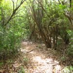 Antigua Hike Trails