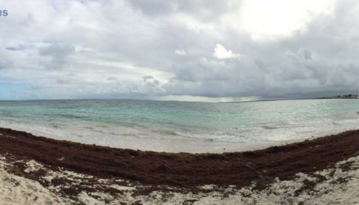 jabberwock-beach